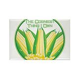 Corn 10 Pack