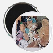 Find Forest the Ferret Magnet