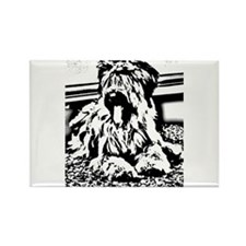 TEENAGE BRIARD Rectangle Magnet