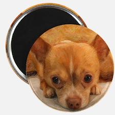 """Chihuahua"" Magnet"