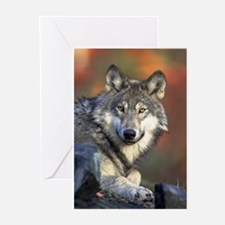 Face of the Timber Wolf Greeting Cards (Pk of 10)