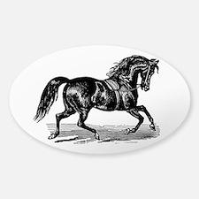 Shiny Black Stallion Horse Decal