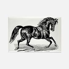 Shiny Black Stallion Horse Rectangle Magnet