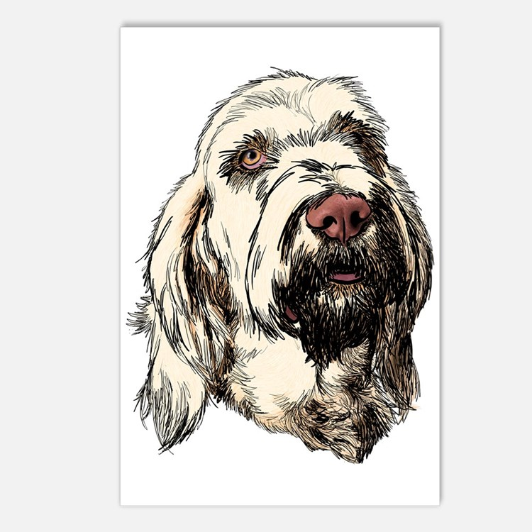Spinone Postcards (Package of 8)