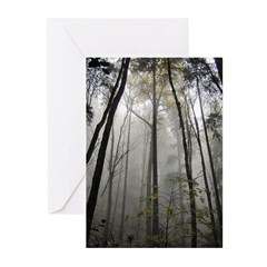 Tranquil Forest Greeting Cards (Pk of 20)