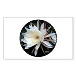 Epiphyte Cactus Flower Sticker (Rectangle 50 pk)