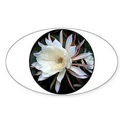Epiphyte Cactus Flower Decal