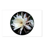 Epiphyte Cactus Flower Postcards (Package of 8)