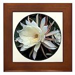 Epiphyte Cactus Flower Framed Tile