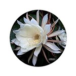 """Epiphyte Cactus Flower 3.5"""" Button (100 pack)"""