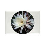 Epiphyte Cactus Flower Rectangle Magnet (10 pack)