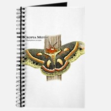 Cecropia Moth Journal