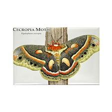 Cecropia Moth Rectangle Magnet