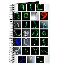 Worm ABCs Journal