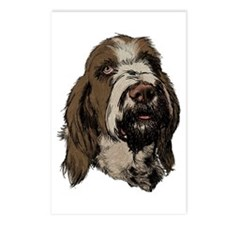 Cute Spinone Postcards (Package of 8)