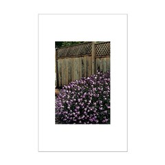 Fence with Wallflowers Posters
