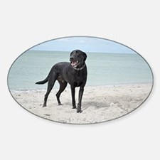 Black Labrador on the beach Decal
