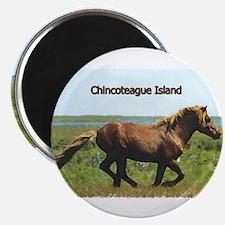 Chincoteague Island pony Magnets