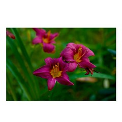 Purple Climatis Postcards (Package of 8)