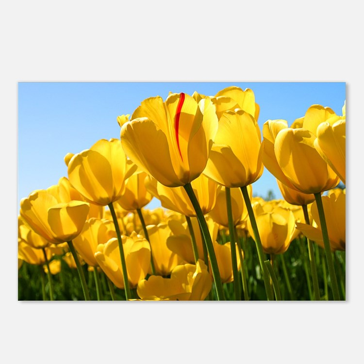 Field of Yellow Tulips Postcards (Package of 8)