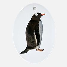 Gentoo Penguin Ornament (Oval)