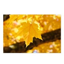 AUTUMN LEAVES Postcards (Package of 8)