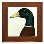 Mallard Drake Head Framed Tile