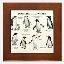 Penguins of the World Framed Tile