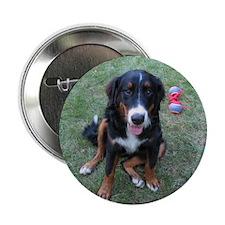 "Bernese 2.25"" Button (100 pack)"
