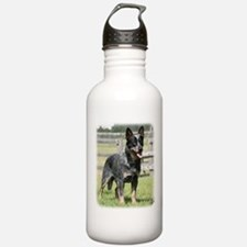 Australian Cattle Dog 9Y749D-017 Water Bottle