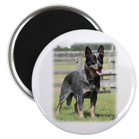 "Australian Cattle Dog 9Y749D-017 2.25"" Magnet (100"