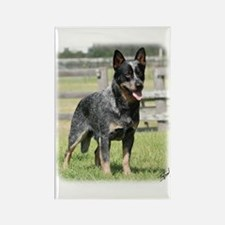 Australian Cattle Dog 9Y749D-017 Rectangle Magnet