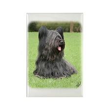 Skye Terrier 9Y766D-039 Rectangle Magnet (100 pack