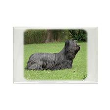 Skye Terrier 9Y766D-041 Rectangle Magnet (100 pack