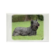 Skye Terrier 9Y766D-054 Rectangle Magnet (100 pack