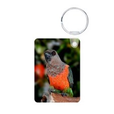 Redbellied Parrot Keychains