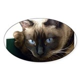 Siamese cat Bumper Stickers