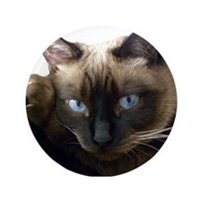 "Funny Cat 3.5"" Button (100 pack)"