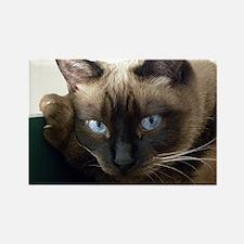 Cute Siamese cat Rectangle Magnet