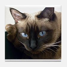 Cute Siamese cat Tile Coaster