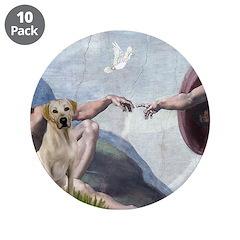 Creation/Labrador (Y) 3.5
