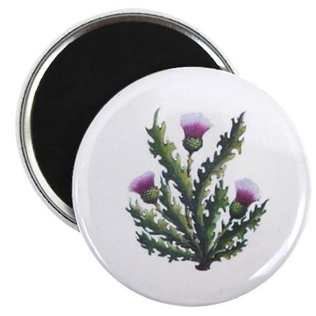 """scottish thistle 2.25"""" Magnet (100 pack)"""