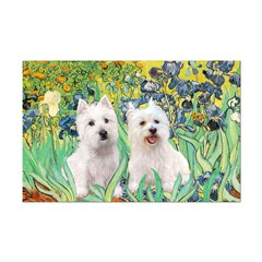 Irises-Westies 3and11 Posters