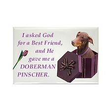 Doberman Pinscher (Rust & Red, Natural Ears) Recta