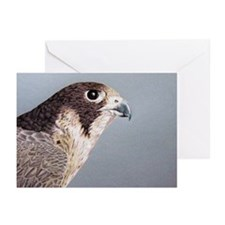 Peregrine Falcon Greeting Cards (Pk of 10)