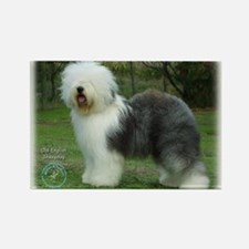 Old English Sheepdog 9F054D-17 Rectangle Magnet (1