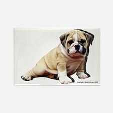Rectangle Bulldog Puppy Magnet
