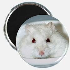 White-Albino Hamster Magnet