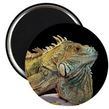 Iguana Photo Magnet