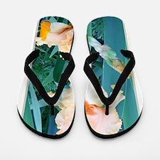 Iris, Photo, flower, Flip Flops